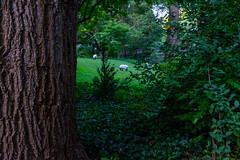 jD201807_0180 (chuckp) Tags: baltimore md rolandpark backyards bucolic notsheep us