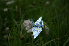 Paper Crane and Imperata cylindrica (Eridanus 21) Tags: ツルとチガヤ imperata cylindrica origami おりがみ ツル 折り紙 折り鶴 チガヤ paper origamiphoto 花 flower 花写真 flowerphotoチガヤ imperatacylindrica papercrane flowerphoto 花が好き