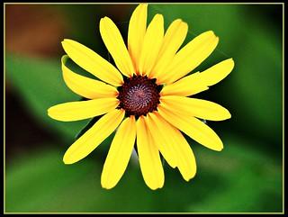 Full on flower