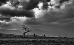 Dark Places (Keith Midson) Tags: tunbridge tasmania rural clouds cloud farm tree trees valley