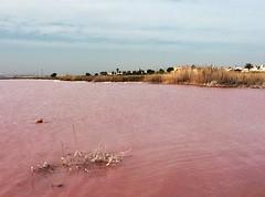 Torrevieja, Laguna Salada (galsafrafoto) Tags: torrevieja spain lake water landscape saltlake lassalinas pinklake view sky pinkwater grass mediterranian palms sight traveling
