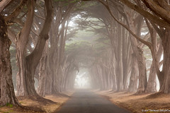 Cypress Tunnel (tom911r7) Tags: fog ptreyes tombrichta tom911r7 landscape landscapephotography travel