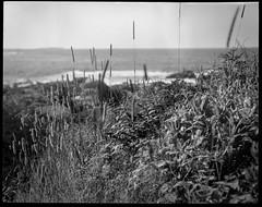 wild shore grasses and ground cover, ocean, Pemaquid Point, Maine, Koni Omega Rapid 100, Super Omegon 90mm f-3.5, Arista.Edu 200, Ilford Ilfosol 3 developer, 7.19.18 (steve aimone) Tags: grasses groundcover ocean atlanticocean seascape pemaquid pemaquidpoint maine coast koniomegarapid100 superomegon90mmf35 aristaedu200 ilfordilfosol3developer 120 120film film mediumformat 6x7 monochrome monochromatic blackandwhite