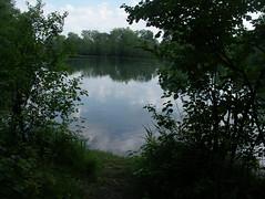 IMGP3416 (barfuss15) Tags: schweiz österreich diepoldsau alterrhein sommer summer oldrhine schwimmen badeslip wasser warm alpenrheintal