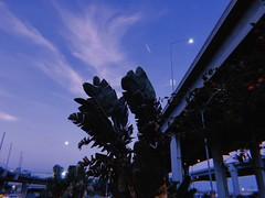 The Second (WallisColours) Tags: 朝 アメリカ 春 黄昏 ヤシの木 ヤシ 木 月 ロサンゼルス エルセグンド カリフォルニア州 カリフォルニア spring morning metro palmtrees southerncalifornia socal elsegundo inglewood greenlinestation bridge moon twilight westcoast ca cali california