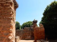 Chellah Minaret and laclacs (Mulligan Stu) Tags: cigogne minaret laclac stork berber phoenician almohad morocco phoenicianruins rabat romanruins roman marinid chellah maroc