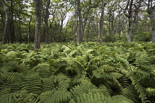 Fern Bed in Shenandoah Park