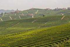 IMG_9366-2 (ObiOneStenobi) Tags: italy italia barolo cuneo la morra wine vino vigneto vineyard piemonte