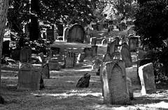 "Worms - jüd.Friedhof ""heiliger Sand""-34 (fotomänni) Tags: friedhofsfotografie heiligersandworms jüdischerfriedhofwormsheiligersand friedhof friedhofsimpressionen cemetery cemeterypictures cemeteryimpressions cemeteryphotography cimetiere manfredweis"