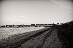 Retour au village (Jean-Marie Lison - PC en panne... À bientôt) Tags: eos80d sigmaart havay village champs chemin campagne noiretblanc monochrome nb