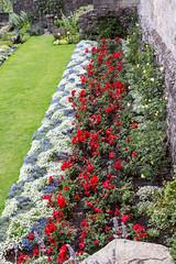 Stirling Castle Queen Anne's Garden (Graham Dash) Tags: queenannegardenstirlingcastle scotland stirling stirlingcastle ceilingart ceilings gardens