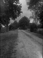 Old trade road (Rosenthal Photography) Tags: rodenstock ilfordfp4 asa125 ilfordlc2912922°c12min 20180801 9x12 städte schwarzweiss anderlingen landschaft grosformat analog epsonv800 dörfer siedlungen landscape trade path pathway track trail trees largeformat anastigmat eurynar 135cm f45 ilford fp4 fp4plus lc29 129 epson v800 summer rodenstock9x12