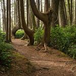 Juan de Fuca Trail thumbnail