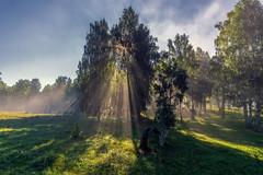 Синусоида жизни #своифото, #пейзаж, #природа, #утро, #рассвет, #дерево, #натура, #восход, #sunrise, #nature, #tree, #Landscape, #sun, #туман, #лучи, #foggy, (ЛеонидМаксименко) Tags: пейзаж восход утро лучи foggy tree nature landscape природа натура дерево sun рассвет своифото туман sunrise