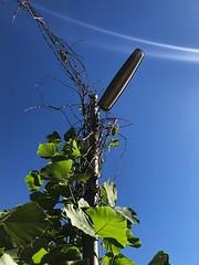 (T_AZ) Tags: japan sky grass
