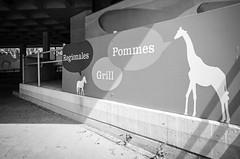 Wenn Tiere sprechen könnten (chipsmitmayo) Tags: minolta xd7 rokkor 50mm f14 adox adotech cms 20 film analog entwickelt selber selbstentwickelt schwarzweiss blackandwhite bw münster westfalen zoo allwetterzoo tiere animals giraffe bild malerei werbung pommes essen snack