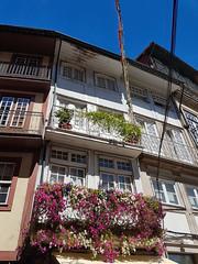 Lovely old balconies - Guimaraes (ShambLady) Tags: balconies balcony balcon minho portugal 2017 260717 guimaraes flowers colourful colorful 阳台 ban công balcón شرفة μπαλκόνι altan varanda balkoni מִרפֶּסֶת balkon យ៉រ balcone बालकनी балкон
