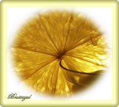 Lemon (bruixazul poc a poc...) Tags: limon lemon macro amarillo prismadecolores