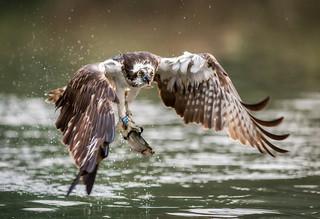 Nature's fisherman