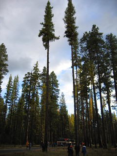2004. Larch Restoration Project. Forest Health Protection National meeting field trip. Sisters Ranger District, Deschutes National Forest, Oregon.