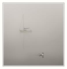 The U-turn (urfnick) Tags: bala wales unitedkingdom gb sundaylights gull nature fog shroud canon 6dmkii