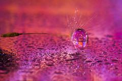 air&water (ASPphotographic) Tags: dandelionseed drop refraction colourful color neon