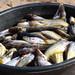 Assorted fish, Zambezi River, Zambia