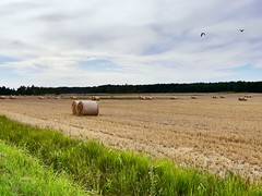 August (docwiththecamera) Tags: clouds sky bird round harvest summer field