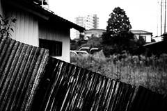 Japon gris, Japon qui s'ennuie (35 - Mortelle Palissade) (www.danbouteiller.com) Tags: japon japan japonia japanese japonais oita kyushu asian asia asiatique asie city ville urban urbain street streetscene streetlife streets streetshot streetphoto streetphotography photoderue photo rue picture photography shot canon5d canon 5dmk2 5d 50mm 50mm14 5d2 5dm2 canon5dmkii mono monochrome monochromatic black white noir blanc nb bw noiretblanc noirblanc filmnoir blackandwhite blackwhite blacknwhite contrast contraste composition grey dark darkness 日本 九州 大分