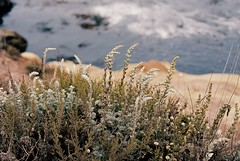 Point Lobos (bingley0522) Tags: nikkormatft3 nikkor50mmf18 ektar100 pointlobos california coastalcalifornia coastal abstract ordinarythings commonplacethings autaut