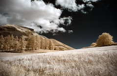 Golden Hills (Lolo_) Tags: ir infrared dévoluy france 715nm forest hautesalpes montagne champ blé field col 05