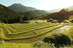 Rice terraces (Teruhide Tomori) Tags: 熊野市 紀和町 丸山千枚田 棚田 段々畑 田舎 水田 稲作 三重県 日本 農村 風景 森 riceterrace kumano maruyamasenmaida spring nature landscape countryside mountain japan japon ricefield