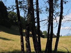DSCN7829 (keepps) Tags: switzerland suisse schweiz summer montbovon fribourg tree field