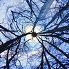 Tree illusion (Christine Steuer) Tags: round wood forest blue color contrast dark illusion tree