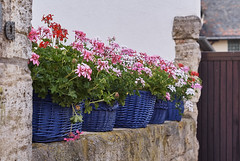 (Oliver Zimmermann) Tags: architecture basket beautyinnature building buildingexterior builtstructure container day flower flowerpot floweringplant fragility freshness growth nature nopeople outdoors plant pottedplant purple stonewall vulnerability wall wallbuildingfeature windowbox sonyalpha