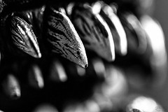 We all have a Monster within; the difference is in degree, not in kind... (Shadows Of The Sun) Tags: critters canon blackandwhite blancoynegro bw monochrome closeup macro details teeth evil monster photographer shadowsofthesunphotography