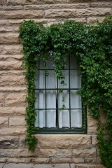 Drapes on the Outside (CTfotomagik) Tags: window vines stone blocks foliage nikon ctfotomagik wall