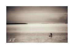 The Paddler (GR167) Tags: floridakeys paddleboard sup emulsion scan kodakfilm ruleofthirds canonrebelfilm ishootfilm ektar c41 24x36 analog monochrome film