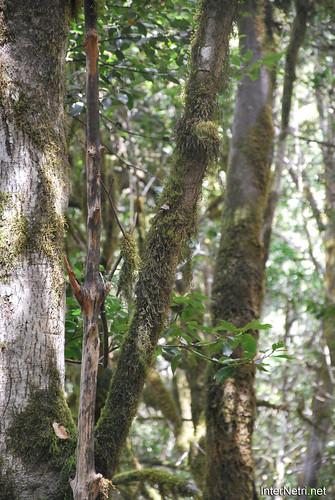 Національний парк Гарахонай, Гомера, Канарські острови  InterNetri  0718