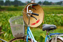 Vietnamese hat hanging on a bicycle (BryonLippincott) Tags: vietnam vietnamese vietnameseculture asia southeastasia countryside country hanoi rural agriculture farm farming ruralscene farmscene farmland rice ricepaddy paddy industry production growing community one outdoors sunlight vn bicycle vietnamesehat blue basket path road