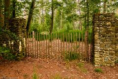 Gate to the woods 2 (cstevens2) Tags: sherenbos belgique belgium belgië malle oostmalle bomen bos forest trees woods