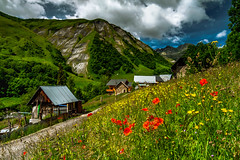 Alps Time (BeNowMeHere) Tags: ifttt 500px wildflowers alpine alpineflowers alps alpstime benowmehere chalet colours flowers france frenchalps landscape mountains nature poppy sauvage savoie savoy sky clouds fleure poppies travel rural scene countryside scenery field scenic hill meadow mountain range tree valley