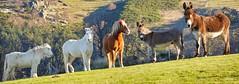 P1210758 (Denis-07) Tags: chevaj horse animal