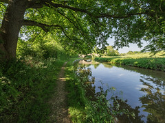 Oxford Canal (Bruce Clarke) Tags: olympus m43 oxfordshire 714mmf28 waterway water omdem1 tackley outdoor oxfordcanal trees landscape towpath