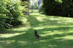 A Bird (yukky89_yamashita) Tags: osaka shimamoto 島本町 forest 大阪 japan bird