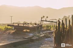 Sunset (Aldo Guerrero) Tags: ensenada valledeguadalupe sunset winery cactus