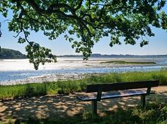 Invitation à une pause (MUTIG) Tags: arbre eau mer banc