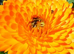 Flower Pattern (Stanley Zimny (Thank You for 32 Million views)) Tags: flower bronx botanical garden ny macro pattern orange yellow bug insect
