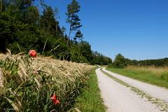 LauterachTalWegerl (H. Eisenreich) Tags: schmidmühlen lauterachtal weg feldweg road poppies mohnblumen wald trees bäume feld field weizen eisenreichhans fuji