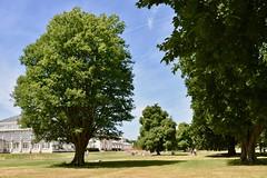 Kew Gardens (scuba_dooba) Tags: uk london gardens botanic england kew
